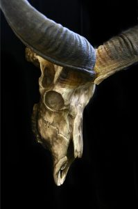 Kudu Skull in Polished Bronze Kudu Skull African bronze sculpture African wildlife art sculptures