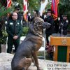 Shortly after the original Marine Museum commission, there was an inquiry about a monument to represent service dogs. Service Sentinel was a perfect fit, and so one was cast and shipped to Florida. Service Sentinel 3 German Shepard Memorial Sculpture Police Dog Sculpture