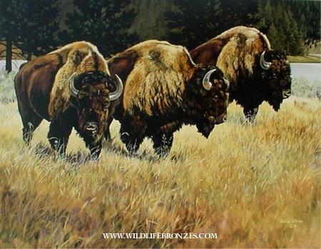 Boundary Line Bison - Prints Only - Running Wild Studio Original Paintings Limited Edition Reproductions