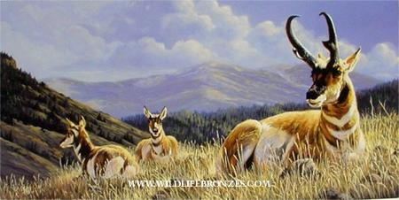 Pair of Queens Pronghorn - Prints Only - Running Wild Studio Original Paintings Limited Edition Reproductions