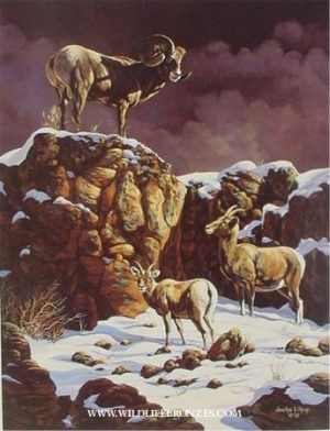 Point of View Bighorns - Prints Only - Running Wild Studio Original Paintings Limited Edition Reproductions