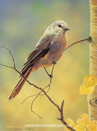 Quaking Gold Gray Jay - Prints Only - Running Wild Studio Original Paintings Limited Edition Reproductions