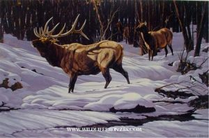 Secret Admirer Elk - Prints Only - Running Wild Studio Original Paintings Limited Edition Reproductions