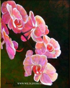 Splash of Pink - Original Sold - Running Wild Studio Original Paintings Limited Edition Reproductions